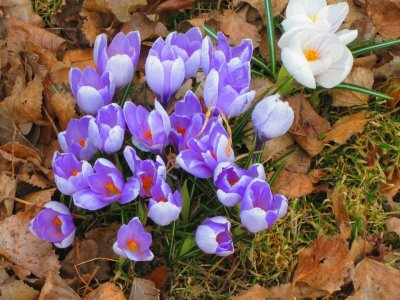 flowers sweden